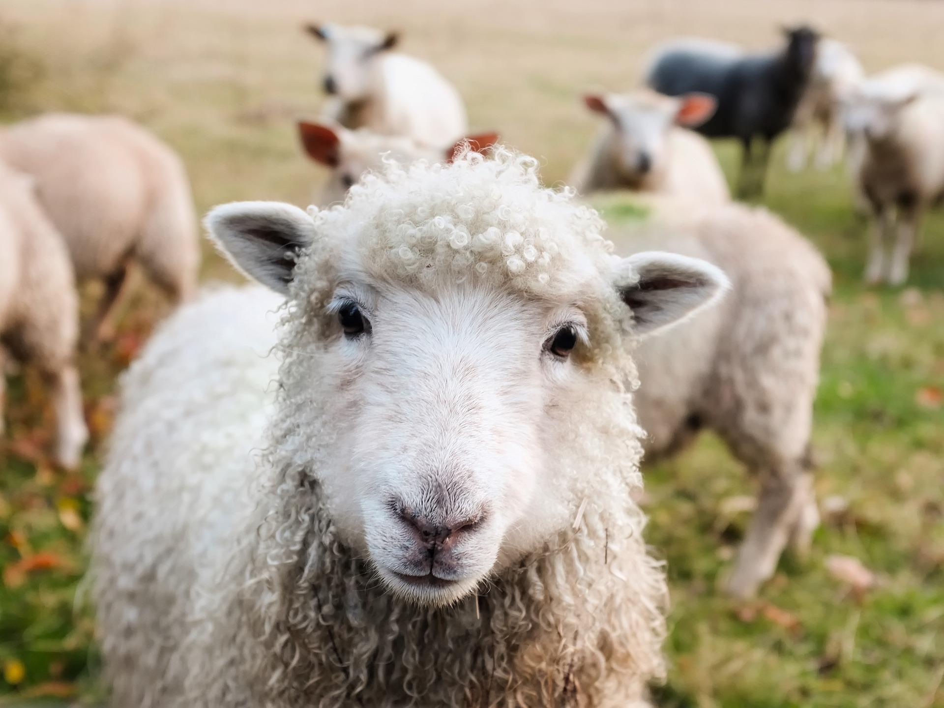 animales de la granja en inglés